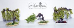 bonsai speciaal
