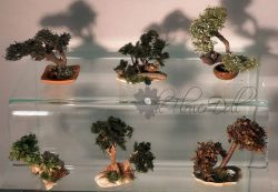 bonsai-speciaal