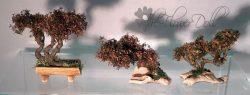 bonsai=speciaal